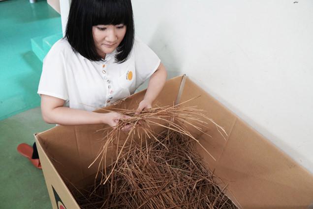 藁納豆を作るときに出た藁のカスを触る朝井さん