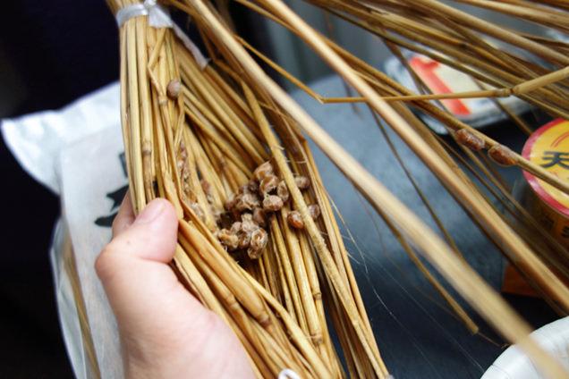 藁の底にこびりつく藁納豆
