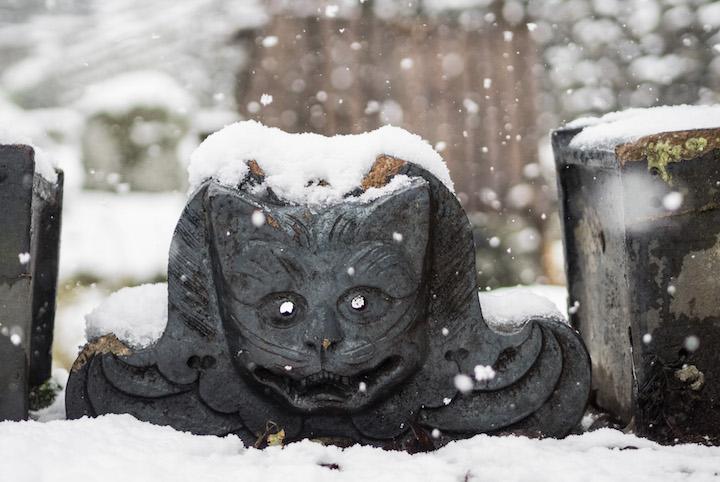 ネコ好き必見! 雪の新潟で猫にまつわるお寺と神社をめぐる