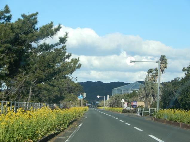 菜の花の道路