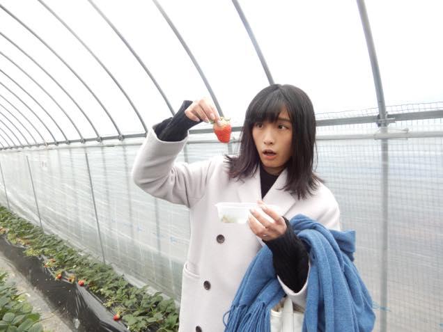 館山観光いちご狩りセンター2
