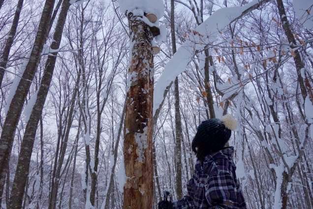 キノコが生えた木