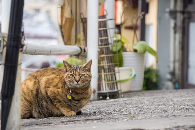 猫に出会う