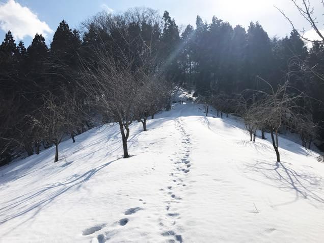 長谷堂城跡道中