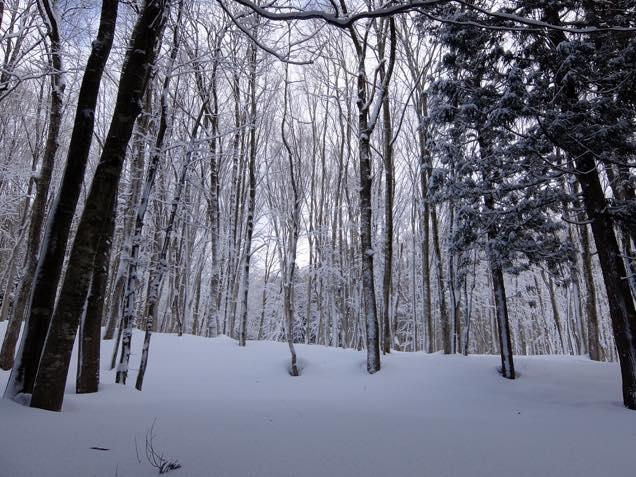 分厚い雪の上を夢中で歩いていると、目の前に「美人林」が現れた。