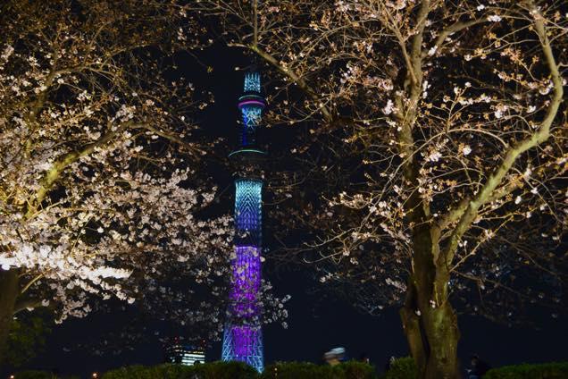 向島・夜桜