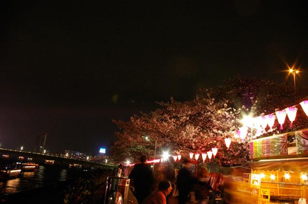 向島の夜桜