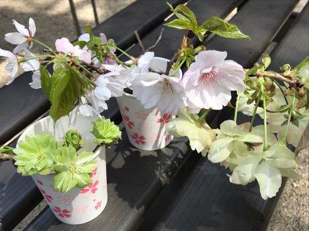多種多様な桜