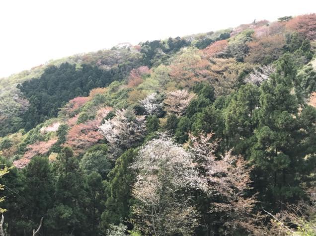 高峯の風景