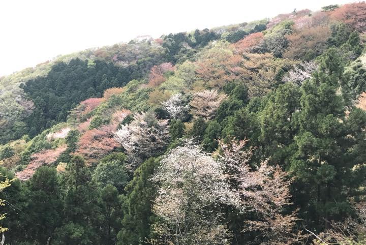 知る人ぞ知る桜の名所・茨城「桜川」で、ひと味違う花見を楽しむ旅