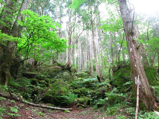 横谷峡の森