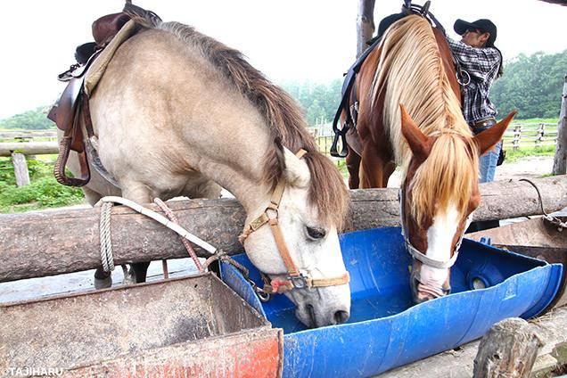 シャロレー牧場 2頭の馬