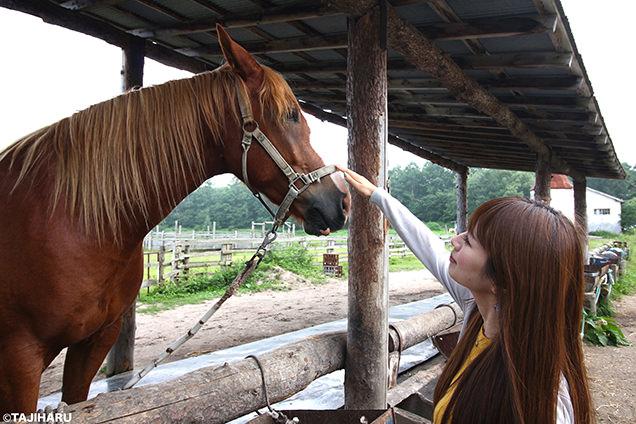 シャロレー牧場 馬との触れ合い