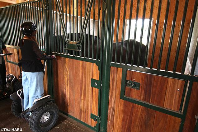 Paard Musée セグウェイ体験