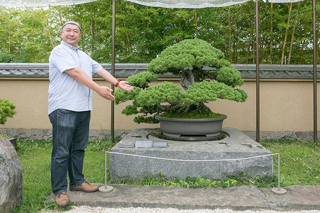 さいたま市大宮盆栽美術館 千代の松