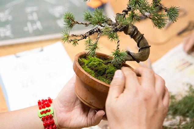 春花園 盆栽教室