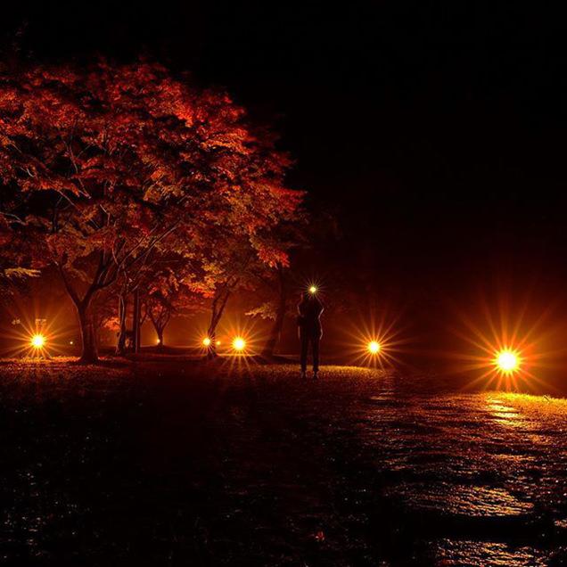 偕楽園公園の雨上がりの紅葉のライトアップ