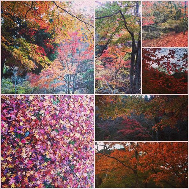 花貫渓谷で紅葉狩り