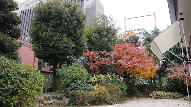 旧江戸川乱歩邸 庭