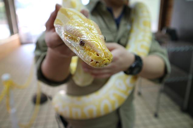 体感型動物園iZooのニシキヘビ