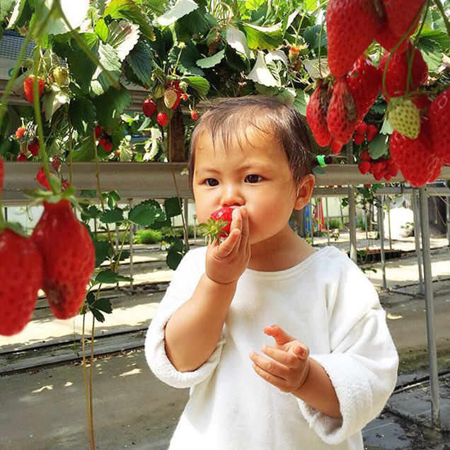 いちごを食べる子ども