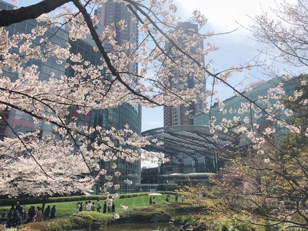 毛利庭園の桜と六本木ヒルズ