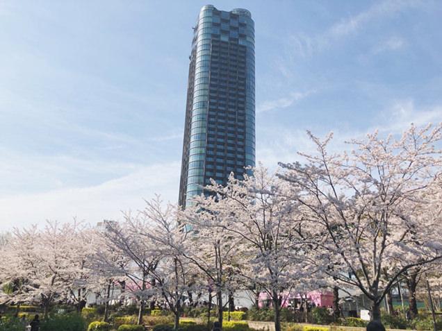 桜とミッドタウン