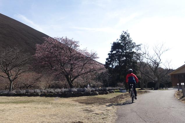 サイクリングツアー 大室山麓 さくらの里