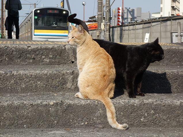 扇町駅 ホーム 猫