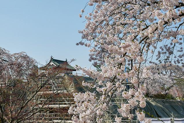 弘前公園 下乗橋からの桜と弘前城天守