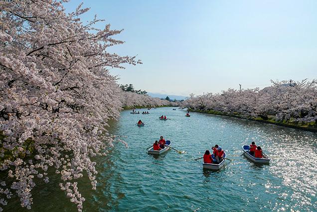 弘前公園 春陽橋からの桜とボート