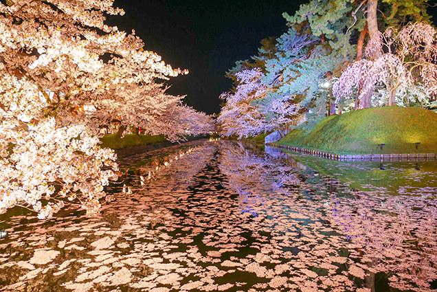 弘前公園 追手門外濠の夜桜と花筏