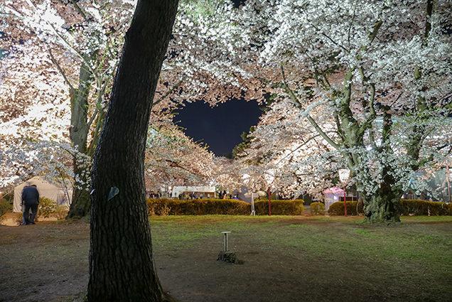 弘前公園 ハート形の夜桜