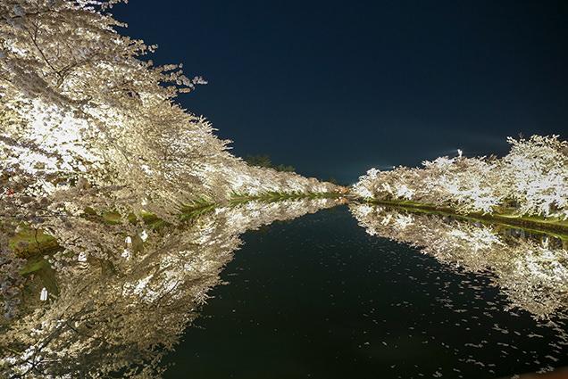 弘前公園 春陽橋からの夜桜