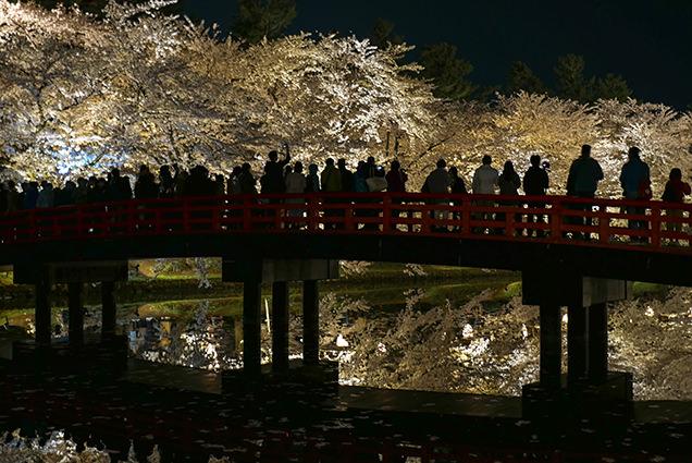 弘前公園 春陽橋からの夜桜と観光客