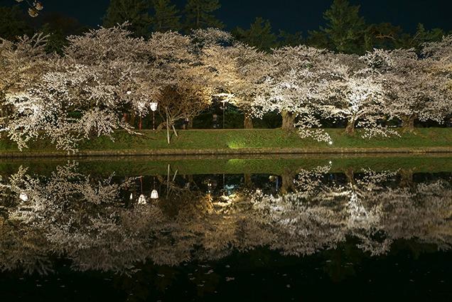 弘前公園 西濠の夜桜
