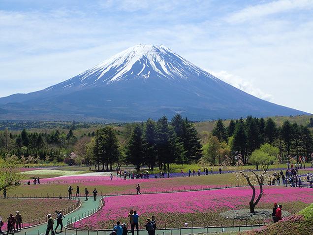 富士芝桜まつり 展望広場からの眺め