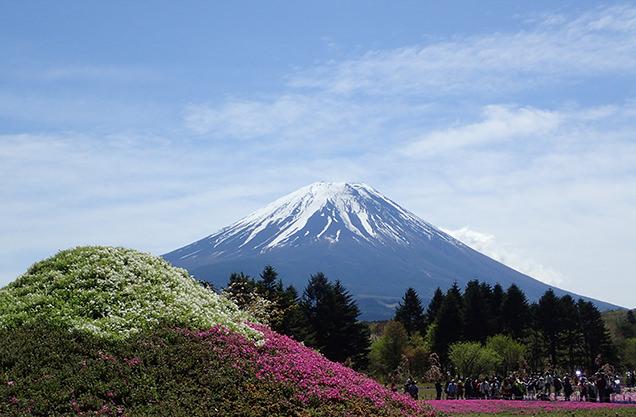 富士芝桜まつり ミニ芝桜富士