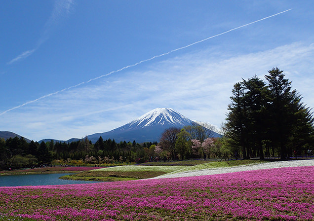 富士芝桜まつり 富士山と竜神池の芝桜