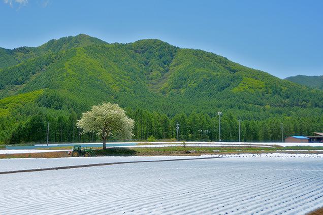 野辺山高原の景観