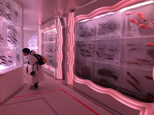 気仙沼駅 「海の市」で氷の水族館