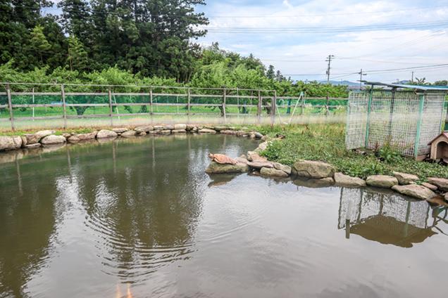 まるせい果樹園 池