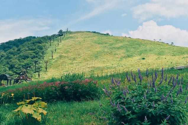 谷川岳天神平の自然と草花