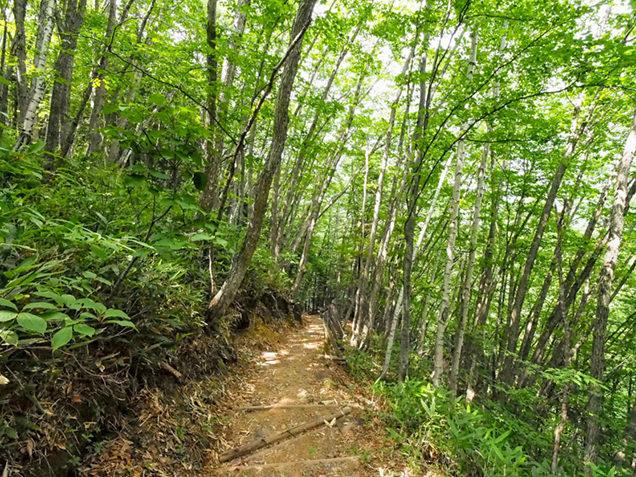 乗鞍高原の登山道