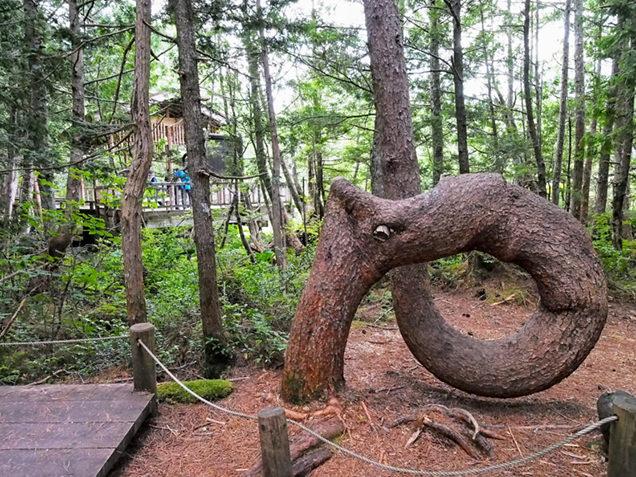乗鞍高原にあるねじねじの木