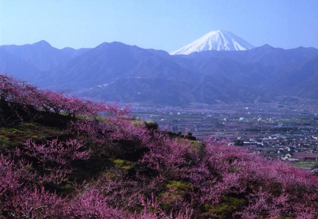 フルーツライン 富士山と桃の花