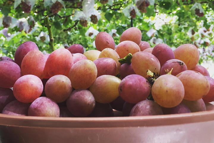 甘〜いフルーツが食べたい!おいしいフルーツの見分け方とおすすめスポット