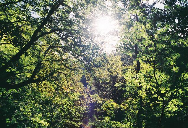 西沢渓谷の自然