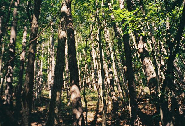 西沢渓谷の自然 森林