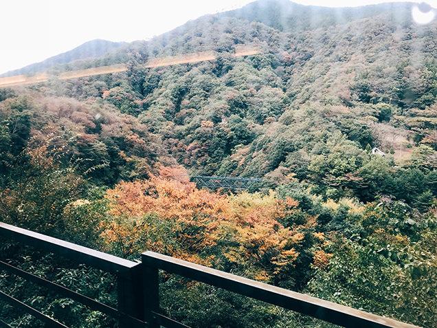 箱根登山電車 車窓 紅葉